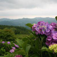 雨降り「寺坂棚田ホタルかがり火まつり」と「天空の紫陽花」