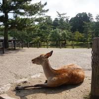 夫と和歌山〜奈良ドライブ旅行★4日目最終日 奈良