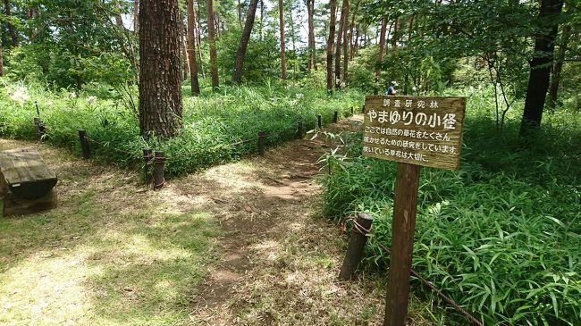 歩くの大好き植物大好きなので、東京ドーム65個分の敷地がある国営武蔵丘陵森林公園へ向かいました。自生するやまゆりを見て癒されたい。日頃の運動不足を何とかしたい。そんな感じの日帰り旅行です