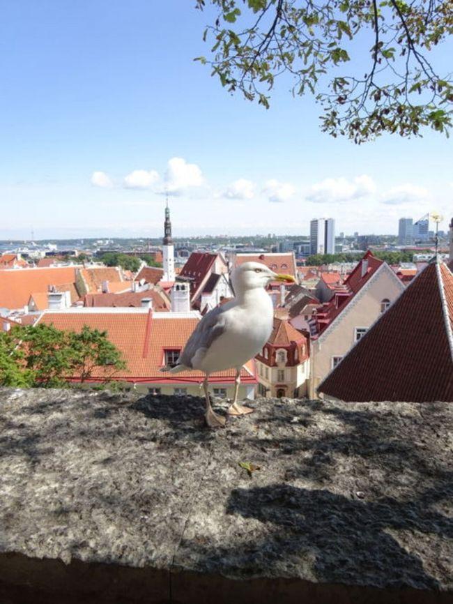 ヘルシンキ、タンペレ(日帰り)、エストニアのタリン(日帰り)を30代女性2人で駆け足観光してきました!観光名所がコンパクトに詰まった、弾丸旅にオススメ出来るスポットでした。お目当てのエストニアコスメ(バスグッズ)もゲット出来て大満足^^