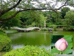 町田の薬師池公園とダリア園