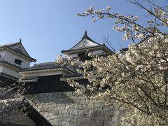 愛媛 松山 お花見と魚を食べる 2019.04.6-7