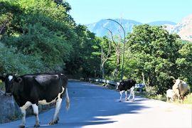 魅惑のシチリア×プーリア♪ Vol.95 ☆サンチュアリオ・ディ・ジビルマンナ:美しい山岳と牛の群れ♪