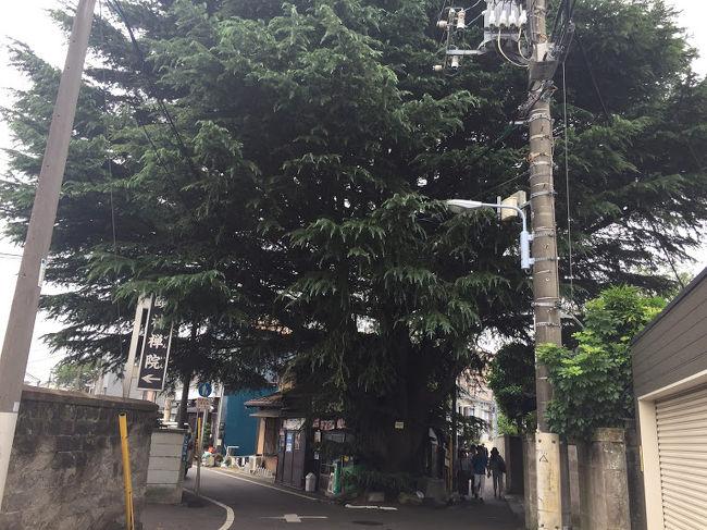 お天気はイマイチでしたが、東京 谷根千(谷中・根津・千駄木)界隈を、てくてくと歩いて探索しました♪<br />日暮里駅からスタートし、<br /> ・朝倉彫塑館<br /> ・和栗や<br /> ・ヒマラヤ杉<br />に立ち寄り、下町歩きを堪能して参りました。