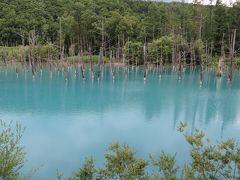 北海道家族旅行・・旭岳源水遊歩道と美瑛の四季彩の丘、青い池、白ひげの滝の紹介です。