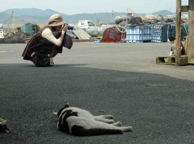 2010年ゴールデンウィークに石巻を訪れました。<br />今回は猫島の猫三昧の様子をご覧ください。