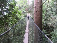 マレーシア 「行った所・見た所」 キナバル公園散策(キャノピーウォークとポーリン温泉の足湯)