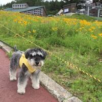 ワンコと一緒!六甲山カンツリーハウス、有馬ます池、有馬温泉に日帰りで行ってきた