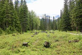 初夏のカナディアン・ロッキー2019 Day2-4(Glacier NP of Canadaでハイキング)