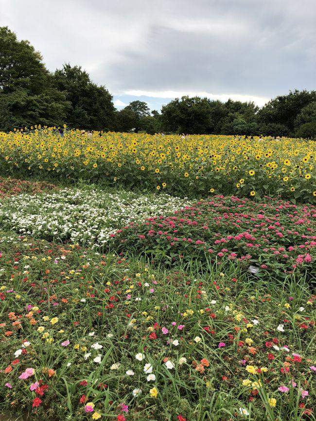 広い公園では 四季折々の花が 楽しめます。