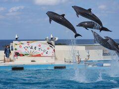 冬の沖縄観光