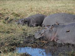 アフリカ南部へ。�ボツワナ共和国チョベ国立公園でボートクルーズ! その1