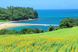 真夏の大分&熊本旅行 (3) 海とヒマワリが織りなす絶景 長崎鼻