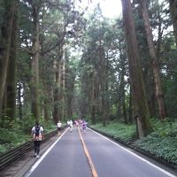 第14回 日光杉並木マラソンへ行く