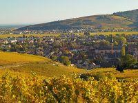 アルザス・ワイン街道を行く26 リクヴィール~トゥルクアイムへ、黄葉のワイン畑をドライブ