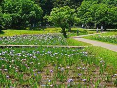 佐倉城址公園-4 菖蒲園・姥が池・旧陸軍訓練階段 花々咲いて ☆歴史を物語る遺構も