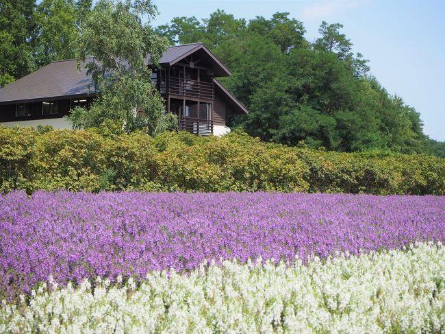 北海道出張の前後で寄り道旅。久しぶりに夏の北海道を楽しんできました。
