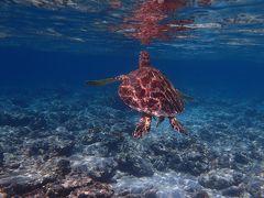 海亀とシュノーケル