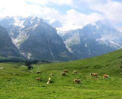 団塊夫婦の2019年アルプス絶景ドライブ&ハイキングー(8)スイスアルプスを歩く(その1:グローセシャイデック~フィルスト)