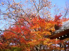 シニアトラベラ― 思い出の旅シリーズ 紅葉の京都・奈良満喫の旅