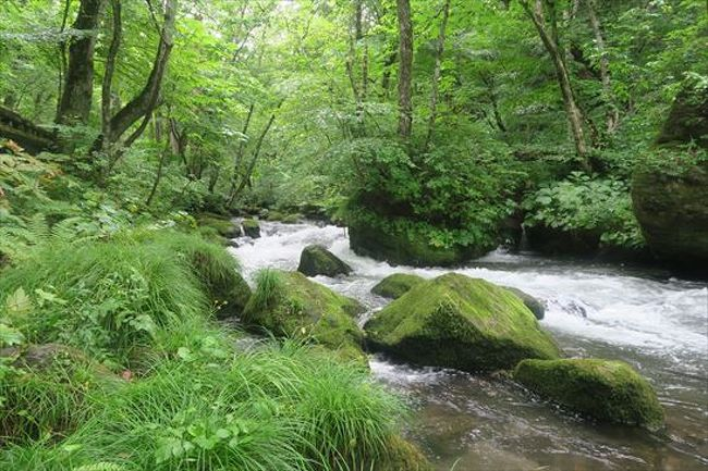緑が綺麗な奥入瀬渓流に行ってきました。