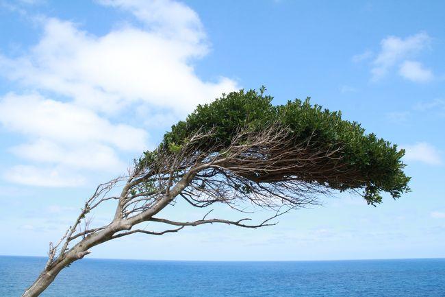 2019年の夏の旅は、少々短めの3泊4日。お盆休みの後半は台風10号の影響が出そうだったため、テレワークも可能なので仕事を入れ、前半に旅を決めました。<br /><br />4回目の投稿は、能登半島の先端にある珠洲岬、別名『聖域の岬』からです。<br />『聖域の岬』には、よくメディアでも取り上げられる有名な『ランプの宿』があります。高級温泉旅館なので、勿論旅行三昧は宿泊していません!車中泊です(笑)<br /><br />珠洲岬は、ランプの宿が経営する観光スポットにもなっています。「空中展望台スカイバード」や「青の洞窟」などがあり、パワースポットしても知られています。特にパワーは得られませんでしたが(笑)<br /><br />珠洲岬の後は、能登半島の先端から西岸を通るルートを選択し、源義経が立ち寄った際に馬を繋いだことから名付けられたと言われる「馬緤海岸」を通り、太陽が穴に重なった時の絶景が有名な「窓岩」がある「曽々木海岸」までドライブしました。<br /><br /><br /><2019年夏 絶景散策旅 富山・石川・福井><br />【1】水のカーテンと芝生が美しい「富岩運河環水公園」の夜景<br /> https://4travel.jp/travelogue/11529024<br />【2】朝靄に霞む砺波平野の散居村<br /> https://4travel.jp/travelogue/11529149<br />【3】富山の雨晴海岸から石川の見附島まで、のんびりドライブ<br /> https://4travel.jp/travelogue/11529541<br />【4】石川 - 聖域の岬、馬緤海岸、曽々木海岸の窓岩(本投稿)<br /><br /><br />旅旅旅-- 旅行三昧 --旅旅旅<br />