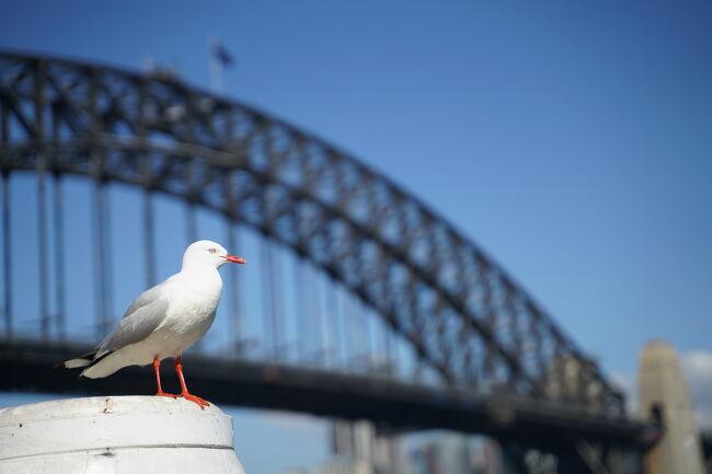 2019年の夏休みはオーストラリアのシドニーとエアーズロックを訪れました。<br />主目的は今年の10月に登頂禁止になるエアーズロック登頂です。<br />航空券は下記を使用しました。<br />・ANAで購入した、KL発券シドニー往復航空券の東京とシドニー往復区間<br />・ジェットスターで購入した、シドニーとエアーズロックの往復航空券<br />最終日のジェットスター便が大幅に遅れて乗り継ぎに失敗し、旅程を1日延長するトラブルはありましたが、目的のエアーズロック登頂を果たし、全日程で天気に恵まれた為、非常に満足度の高い旅行になりました。<br /><br />■旅程(この旅行記は★のついた日程について)<br /> 1,2日目 東京⇒シドニー<br />  NH879  HND 22:30 ⇒ SYD 08:55(+1)<br /> 3日目 ブルーマウンテンズ<br />★4日目 シドニー<br /> 5日目 シドニー⇒エアーズロック<br />  JQ660  SYD 10:40 ⇒ AYQ 13:40<br /> 6日目 エアーズロック<br /> 7日目 エアーズロック⇒シドニー<br />  JQ661  AYQ 14:15 ⇒ SYD 17:45※3時間遅延<br /> 8,9日目 シドニー⇒東京<br />  NH880  SYD 20:55 ⇒ HND 05:25(+1)