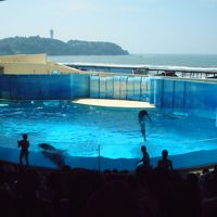 2019年 8月旧盆 江の島・・・・・�新江の島水族館