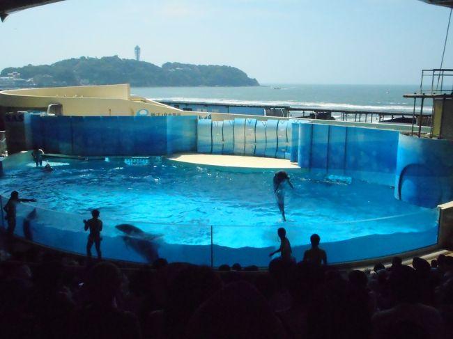 酷暑の中、新江の島水族館に行ってきました。