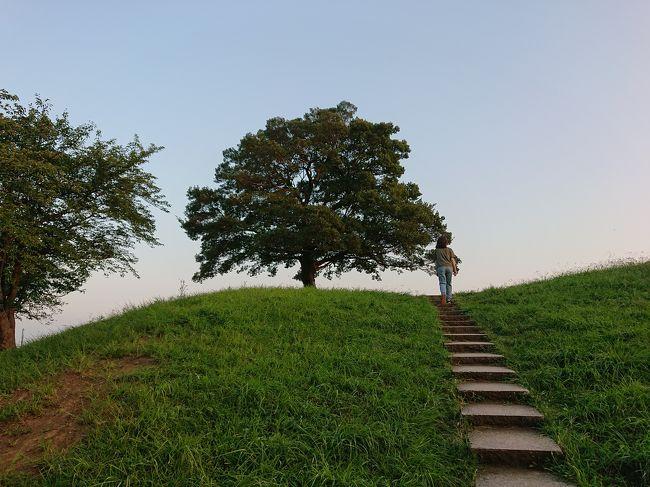 毎日猛暑が続きます。<br />今日も暑くて行動を開始したのは夕方から。<br /><br />このままだと家事だけで1日が終わってしまうので、頑張って保土ヶ谷の自宅から徒歩20分のところにある夕暮れの清水ケ丘公園まで散歩してきました。<br />夏の夕陽に照らされたゆずの木が素敵です。<br /><br />夏の清水ケ丘公園に来るとなんとなくプチ北海道気分が味わえます。