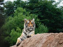 上海・ハルビン・牡丹江の旅。牡丹江郊外の鉄道博物館と虎動物園へ、その3