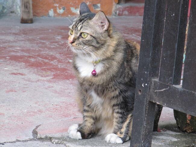 1997年に猫撮りに目覚め、ひとり写真を見返して楽しんできましたが、<br />一念発起して、撮りためた猫たちを、2019年から遡ってお披露目しています。<br />将来、回想法の手段に使えるんじゃないか、とも愚考しております。<br />猫好きトラベラーの皆さん!そうでもないトラベラーの皆さん!<br />お気に入りの猫スポット、猫指数四つ星、五つ星の地域情報、<br />お寄せいただけると嬉しいです(=^x^=)<br /><br />第十弾は順番抜かして2015年GWのマレーシア、目的は世界遺産、ペナン島のジョージタウンとマラッカの散策と猫撮り。もう5年も前で、とにかく暑かったというに記憶に尽き、詳しい情報もありませんが、ご覧いただけますと幸いです。<br /><br />▼2015マレーシアの旅程 <br />1日目 地元空港08:20 ⇒ 成田空港09:30<br />         成田空港11:00 ⇒ クアラルンプール(KL) 17:45  KL 泊<br />2日目 KL11:20 ⇒  ペナン空港12:20  ジョージタウン 泊<br />3日目 ジョージタウン 泊<br />4日目 ペナン空港09:00 ⇒ KL09:55 <br />         KLIA2(空港)11:45 ⇒ マラッカ (※) マラッカ 泊<br />5日目 マラッカ 泊<br />6日目 マラッカ10:00 ⇒ KL (※)  KL 泊<br />7日目 バトゥ洞窟・プトラジャヤ KL23:30 ⇒   機中泊 <br />8日目 成田空港07:40   成田空港09:55 ⇒ 地元空港11:05<br />※バス移動 Transnasional社 当日購入<br />