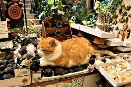 魅惑のシチリア×プーリア♪ Vol.217 ☆エリーチェ:ディスプレイの猫と美味しいグラニータ♪