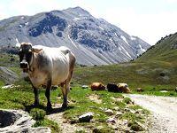 2019年 久しぶりのスイスハイキング(エンガディン)(6)世界遺産ミュスタイア修道院には入らず、マンラシュラハイキングでは道に迷い!