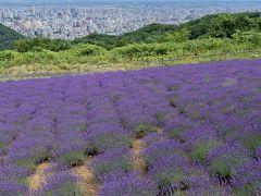 札幌に天空のラベンダー畑があるなんて!そして札幌夏まつりは超巨大ビアガーデン