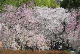 2019春、鶴舞公園から名古屋城への桜探訪(1):4月7日(1):鶴舞公園、給水塔、公会堂、胡蝶ケ池、奏楽堂