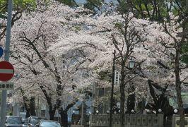2019春、鶴舞公園から名古屋城への桜探訪(4):4月7日(4):鶴舞公園、名古屋東照宮、那古野神社、外堀