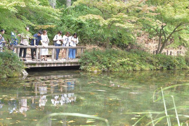 まるで「モネの池」!岐阜県関市の美しすぎる池<br />岐阜県関市板取にある名もなき池(通称 モネの池)<br />透明度の高い湧水に咲く睡蓮がとても美しく、まるで絵画の「モネの池」よう。<br />フランスの画家クロード・モネが描いた「睡蓮」に似ていることから、<br />「モネの池」と呼ばれ、関市の人気スポットとなっています。<br />しかし、そんな美しさがなく、がっかりしたと!?