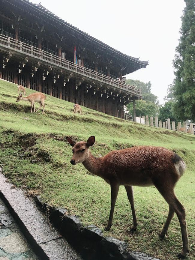 大阪のイベントに合わせてなんば食べ歩きと奈良観光<br />暑すぎて疲れた~