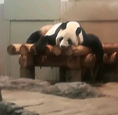 2019 夏〈4日目〉〈5日目〉東京2日間 上野動物園,ライオンキング @劇団四季 子連れ旅