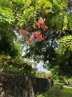 2019年サマーバケーションは9度目のハワイ島+初のマウイ島10日間(*^-^*)2日目Part3~ワイコロア地区のショッピング~
