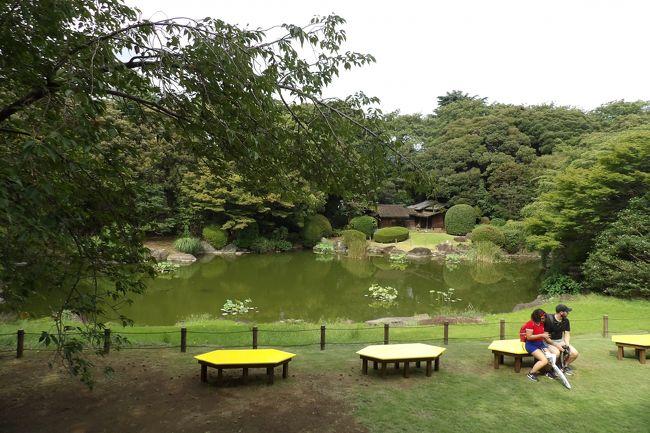 上野にある東京国立博物館(東博)本館裏の日本庭園は独立行政法人化されると真っ先に秋と春に一般公開されるようになった。したがって、平成15年(2003年)秋から毎年公開してきており、春の桜の頃には余りにも雑踏の上野公園を避けて、静寂な東博の日本庭園で桜見するバスツアーも定着している。それでいて、秋の紅葉が綺麗な時期になる前に閉園してしまっていた(https://4travel.jp/travelogue/11417905)。それもそのはず、地球温暖化の影響で秋の紅葉は遅くなってしまっているのだ。<br /> それでいて、これまでは本館からベランダに出ることができることもあった。しかし、今回はベランダだけではなく、庭園内にも出入りしている。いつも庭園からベランダへと上ってくる入館者がないようにと警備員がベランダ側に立っているので、聞いてみた。<br /> 現在は通年でこの庭園の本館側が入園可能になったが、池の向こう側の茶室などがある区域は入園禁止になっているのだそうだ。<br /> それが、今では日本庭園の通年公開が検討されているというのだ。<br /> 東京には大名庭園などこうした日本庭園は残っている。しかし、博物館を訪れた際に気軽に楽しめる日本庭園は、特に外国人にとっては、春の桜の時期、あるいは秋の紅葉(の手前)の時期以外にも新緑の時期や葉を落としている時期にも楽しみたいアイテムであろうか。そうしたことが実現されるのだろう。尤も、日本庭園が公開されていてもあるいは閉園していても東博の入場料は同じで、閉園している時期に訪れるとコストパフォーマンスが悪いことになる。<br /> ただ、気掛かりなのは、ベランダの右側の池端にある綺麗な花を咲かせる桜の木にだけは名札がないことだ。最初は「正福寺桜」の看板が掲げられていたが、その後の指摘を受けて別の名の看板に代わった。それもすぐに撤去され、もう何年も名札がないままだ。桜見の人たちはベンチから見て綺麗な花なので木の元へ行ってみる。しかし、この綺麗な桜の名前は分からないままなのだ。東博が本来のレベルにあった研究員(、博士の学位を持つことは最低条件であろう)ばかりであれば、他分野の専門家(、勿論博士の学位を持つ)からも同等に見なされ、こうした桜に詳しい専門家からの助言やあるいはこうした専門家を紹介してもらえるであろう。しかし、学位がないと無視されて5年以上も経ってしまったのであろうか。<br /> なお、かつては著名な庭師がこの日本庭園を守っていたが、現在ではそうした庭師もおらず、シルバーセンターの人に草むしりなどの庭の手入れ作業をお願いしているのだという。通年公開にするのであれば、専属の庭師が必要になろうか。<br />(表紙写真は東博本館裏の日本庭園)