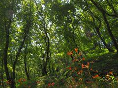 ひっそりと咲くキツネノカミソリ