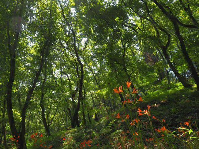 今年の夏は、近場にお出かけ。泉自然公園には、オレンジ色のキツネノカミソリが群生して咲いていました。