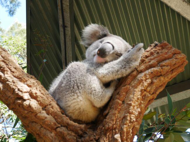 母娘旅 2019年夏休み in Sydney③<全6回>タロンガ動物園、QVB、夜景
