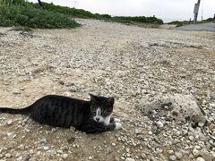 2019年夏沖縄~2日目読谷編~