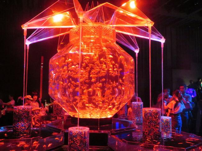 数年ぶりにコレド室町の日本橋三井ホールで開催しているアートアクアリウムに行ってきました。三井ホールでの開催は今年で最後ということで、今までの代表作品を展示しています。<br />金魚は、過去最大の約1万匹だそうです。<br />光と音がリンクして幻想的な世界を繰り広げています。<br />そんなに広い会場ではありませんが、所狭しといろいろな金魚が見られます。