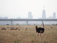 10度目のケニア ※1日目 【カタール航空利用〜ナイロビ国立公園】