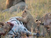 10度目のケニア ※5日目(前半) 【Zebra Plains Mara Camp出発まで】