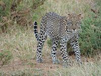 10度目のケニア ※7日目~最終日 【Samburu Game Lodge ~帰国】